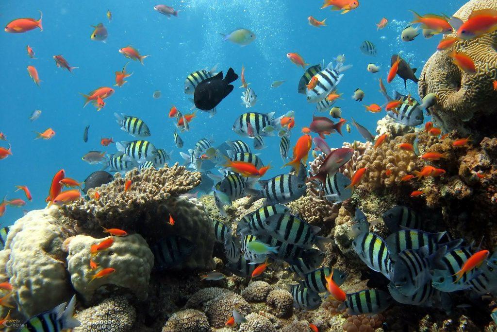 Koliko ima mjesta za upoznavanje riba